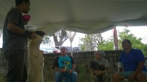 Festival Agroalimentario y Cultural 2016 (16)