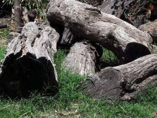 maderas (4)